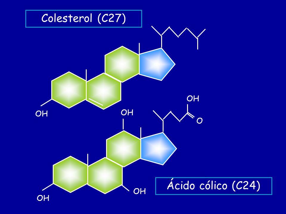 Colesterol (C27) OH OH O Ácido cólico (C24)
