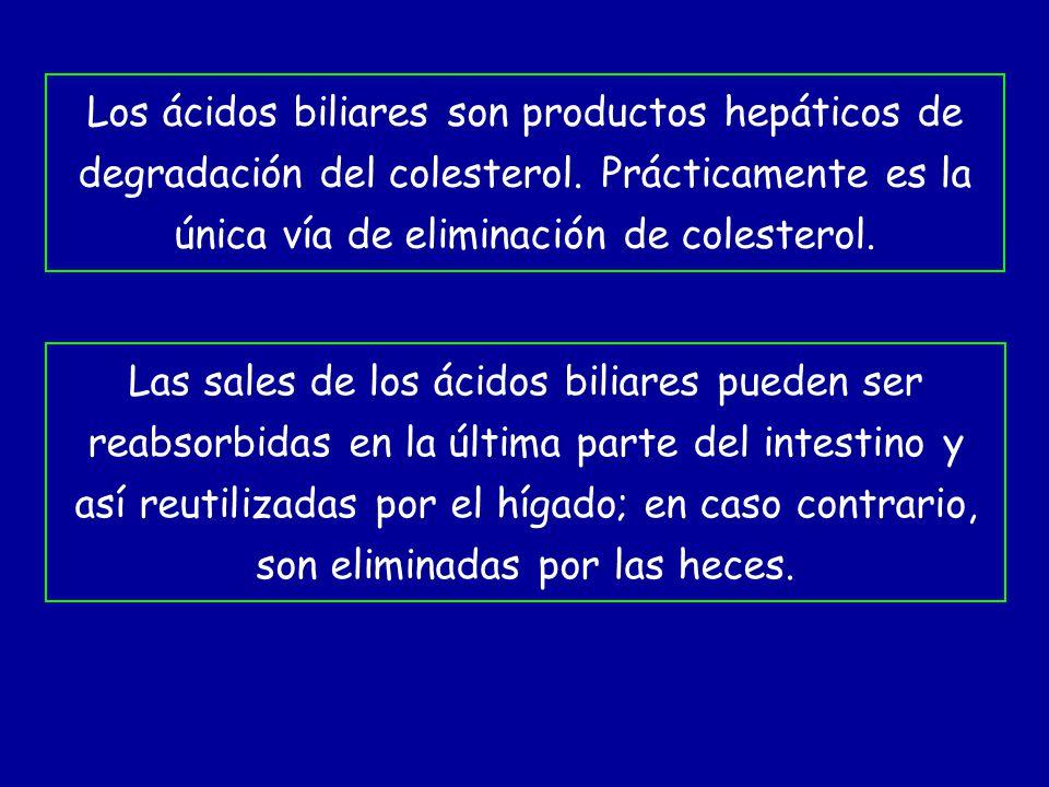 Los ácidos biliares son productos hepáticos de degradación del colesterol. Prácticamente es la única vía de eliminación de colesterol.