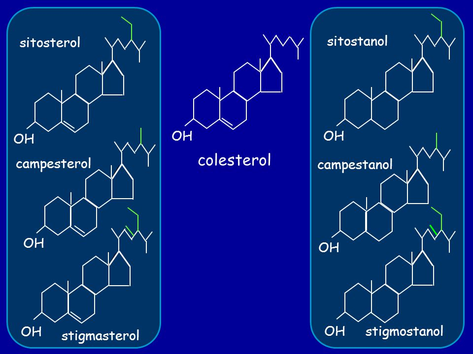 colesterol OH sitosterol campesterol stigmasterol OH sitostanol