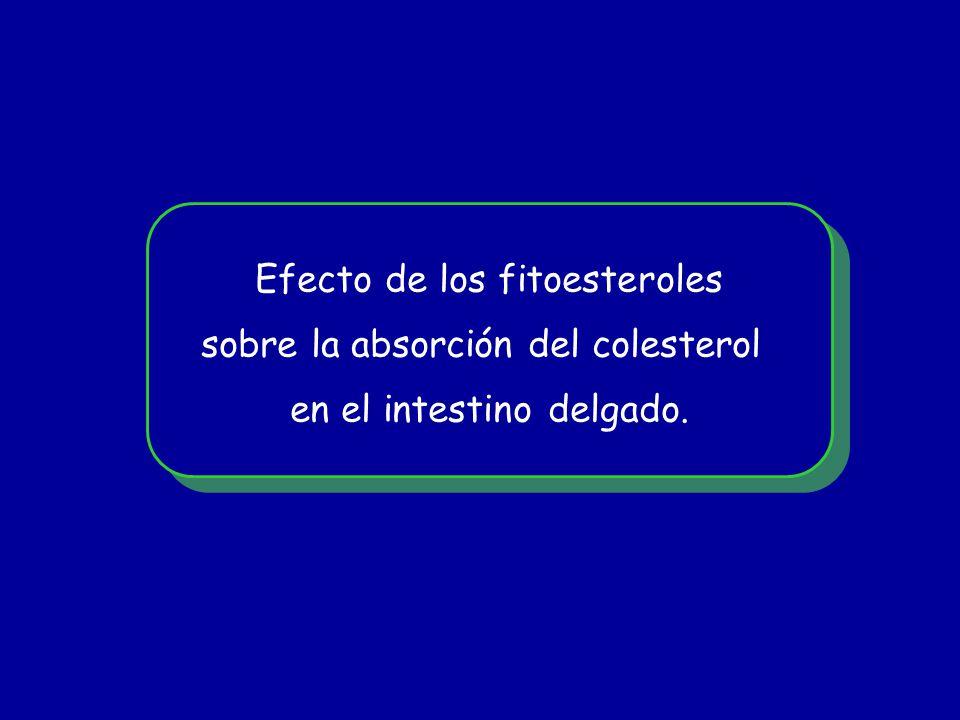 Efecto de los fitoesteroles sobre la absorción del colesterol