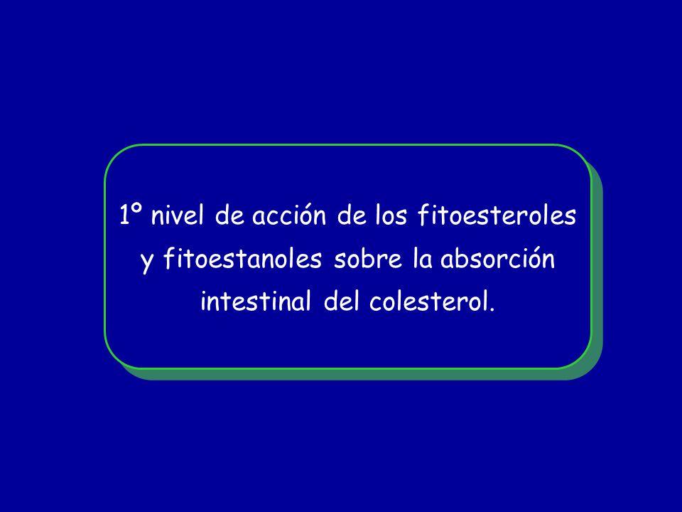1º nivel de acción de los fitoesteroles