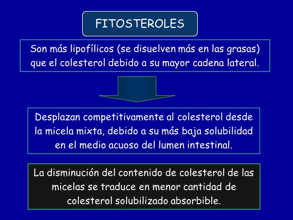 FITOSTEROLES Son más lipofílicos (se disuelven más en las grasas) que el colesterol debido a su mayor cadena lateral.