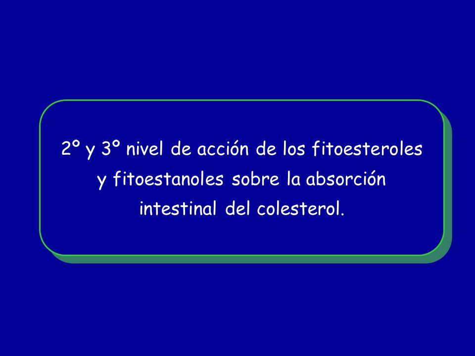 2º y 3º nivel de acción de los fitoesteroles