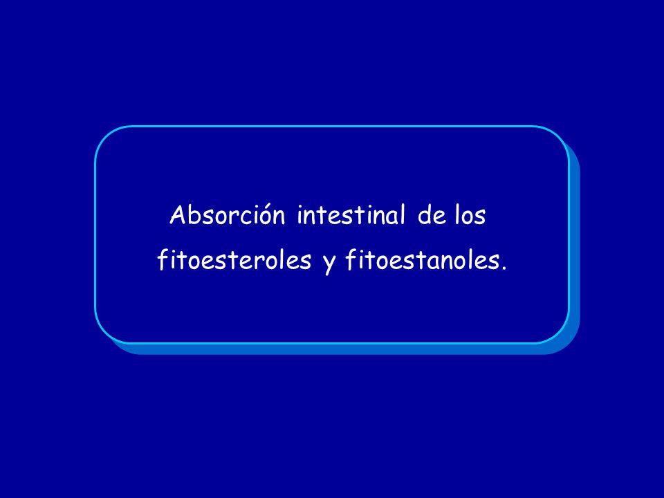 Absorción intestinal de los fitoesteroles y fitoestanoles.