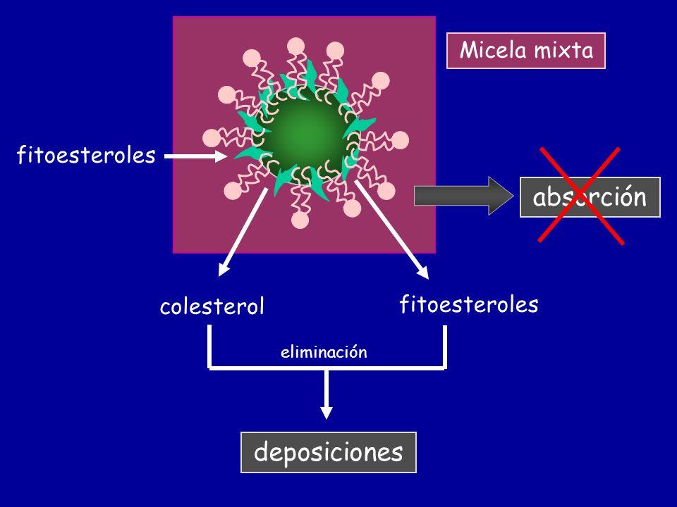 absorción deposiciones Micela mixta fitoesteroles fitoesteroles