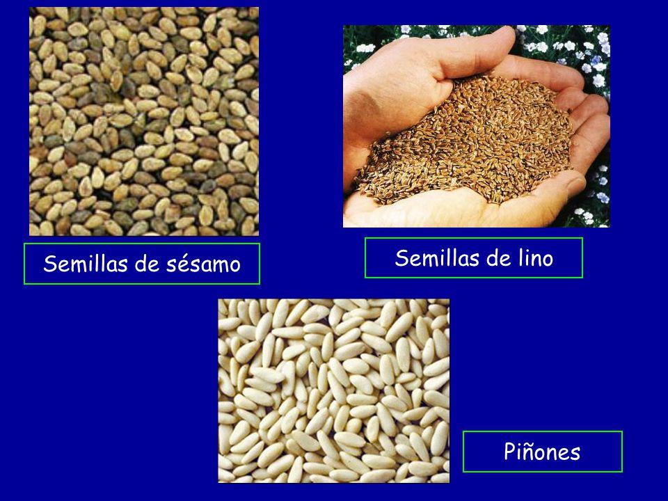 Semillas de lino Semillas de sésamo Piñones