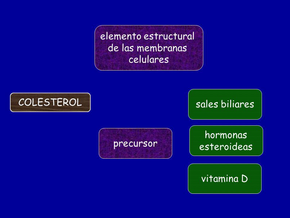 elemento estructural de las membranas. celulares. sales biliares. COLESTEROL. hormonas. esteroideas.