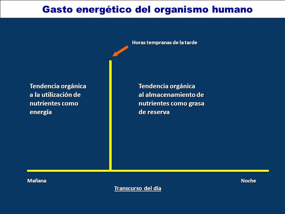 Gasto energético del organismo humano