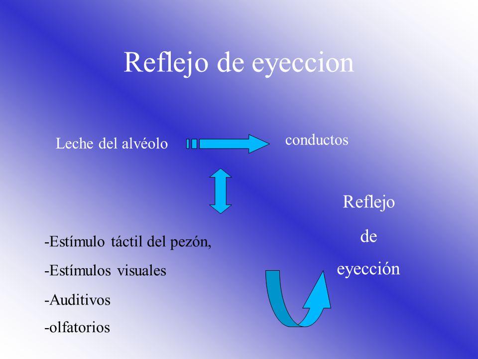 Reflejo de eyeccion Reflejo de eyección conductos Leche del alvéolo