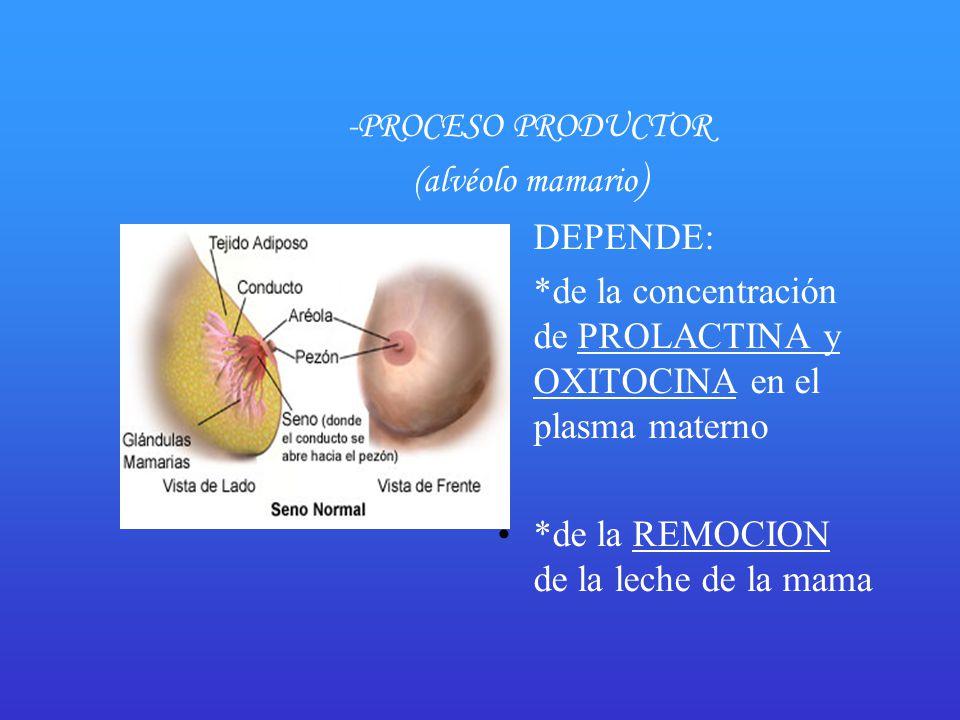 -PROCESO PRODUCTOR (alvéolo mamario)