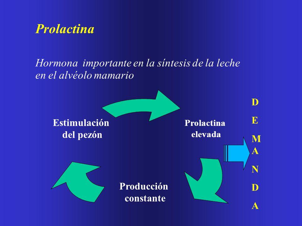 Prolactina Hormona importante en la síntesis de la leche en el alvéolo mamario. Prolactina. elevada.
