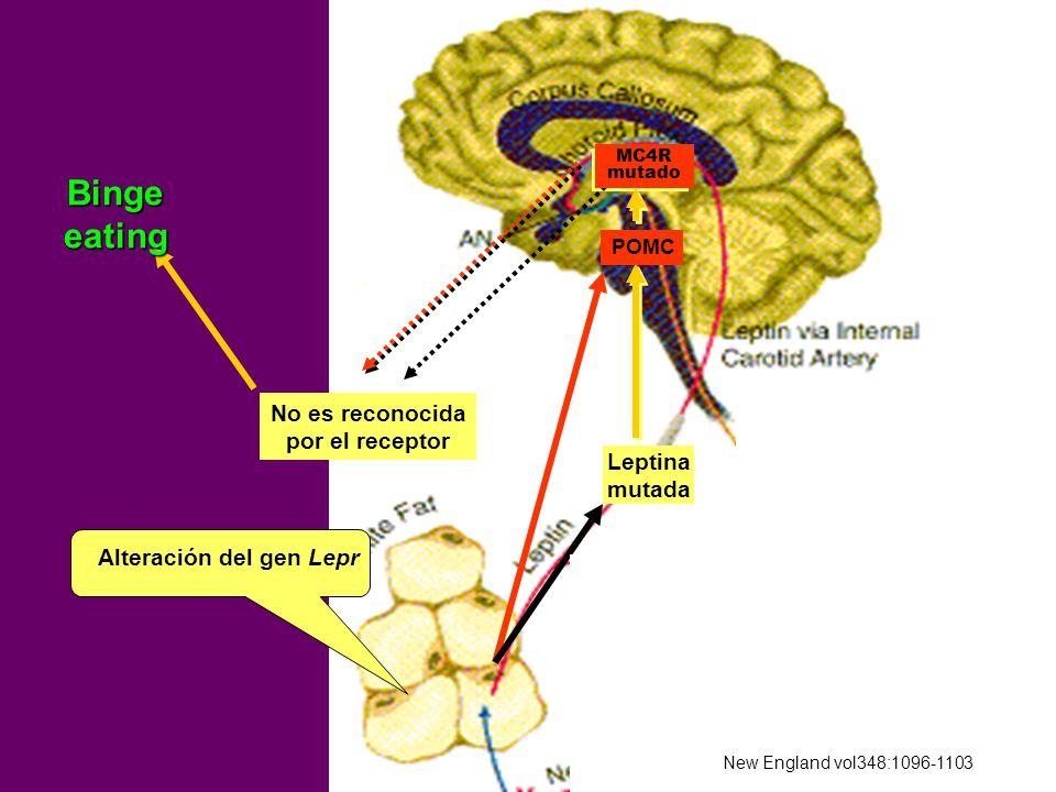 Binge eating MC4R No es reconocida por el receptor Leptina mutada