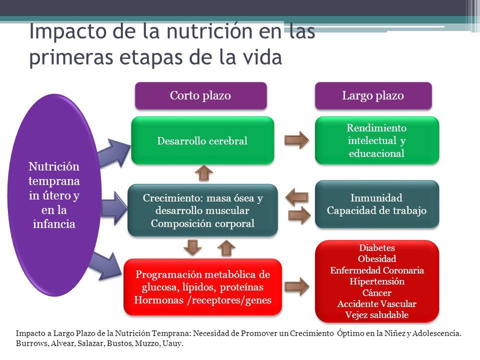 Impacto de la nutrición en las primeras etapas de la vida