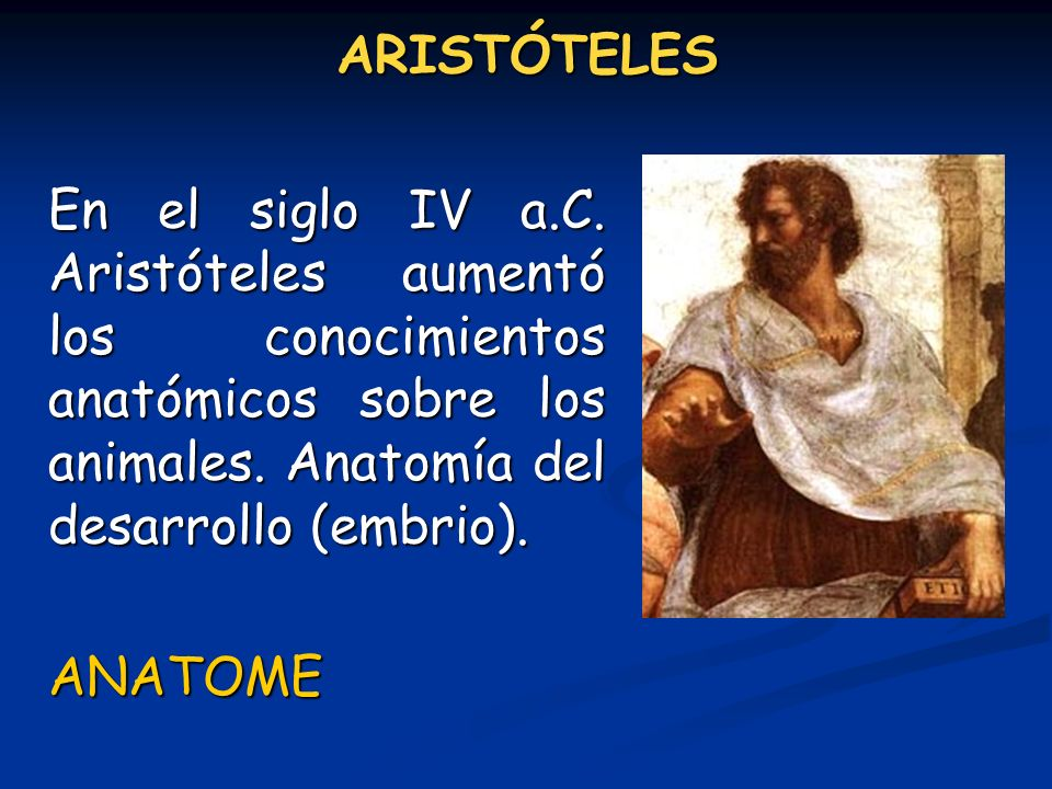 ARISTÓTELES En el siglo IV a.C. Aristóteles aumentó los conocimientos anatómicos sobre los animales. Anatomía del desarrollo (embrio).
