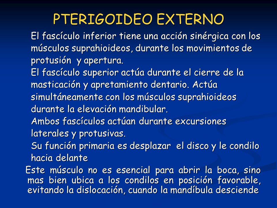 PTERIGOIDEO EXTERNO El fascículo inferior tiene una acción sinérgica con los. músculos suprahioideos, durante los movimientos de.