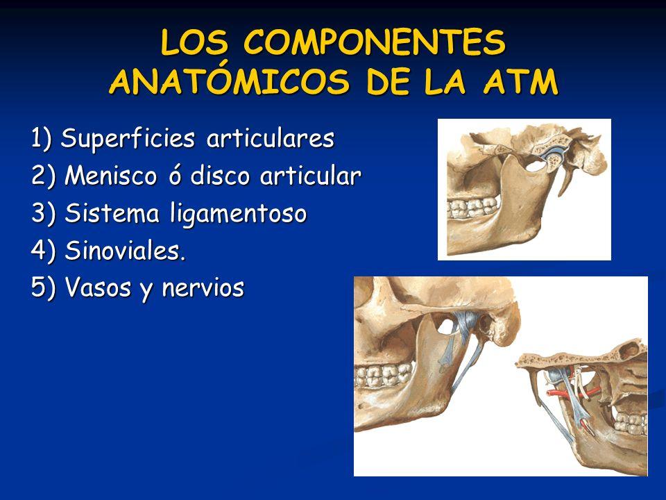 LOS COMPONENTES ANATÓMICOS DE LA ATM