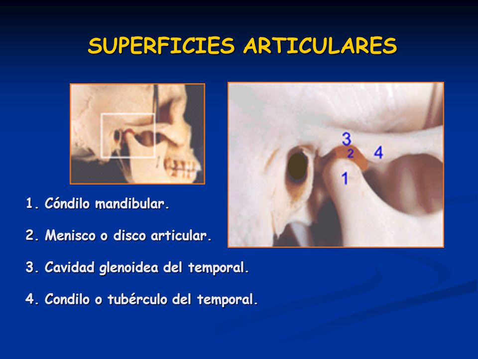 SUPERFICIES ARTICULARES