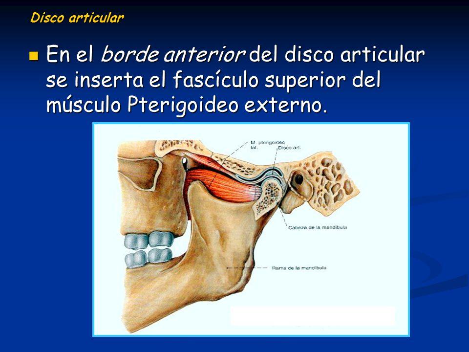 Disco articular En el borde anterior del disco articular se inserta el fascículo superior del músculo Pterigoideo externo.