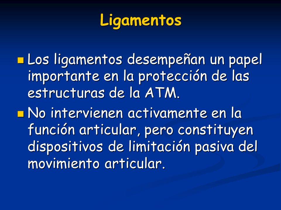 Ligamentos Los ligamentos desempeñan un papel importante en la protección de las estructuras de la ATM.