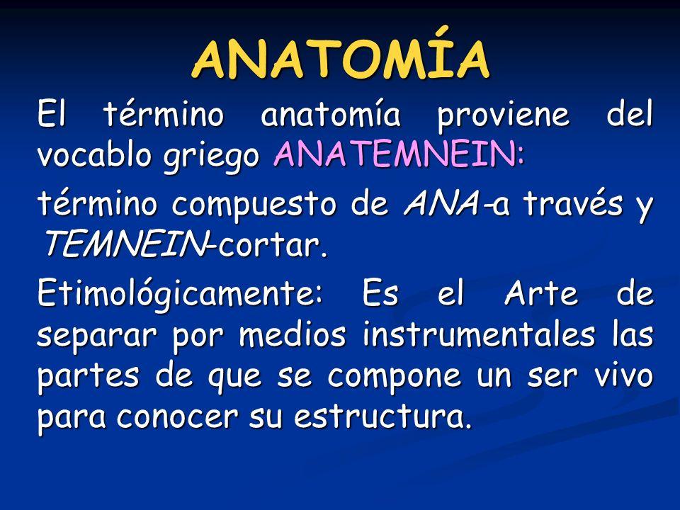 ANATOMÍA El término anatomía proviene del vocablo griego ANATEMNEIN: