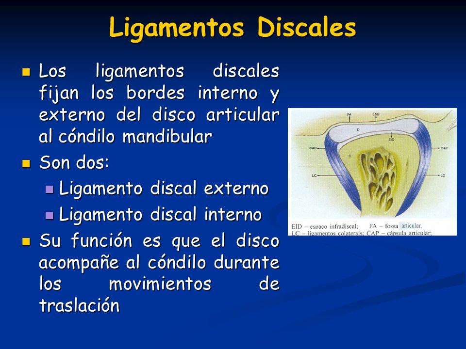 Ligamentos Discales Los ligamentos discales fijan los bordes interno y externo del disco articular al cóndilo mandibular.