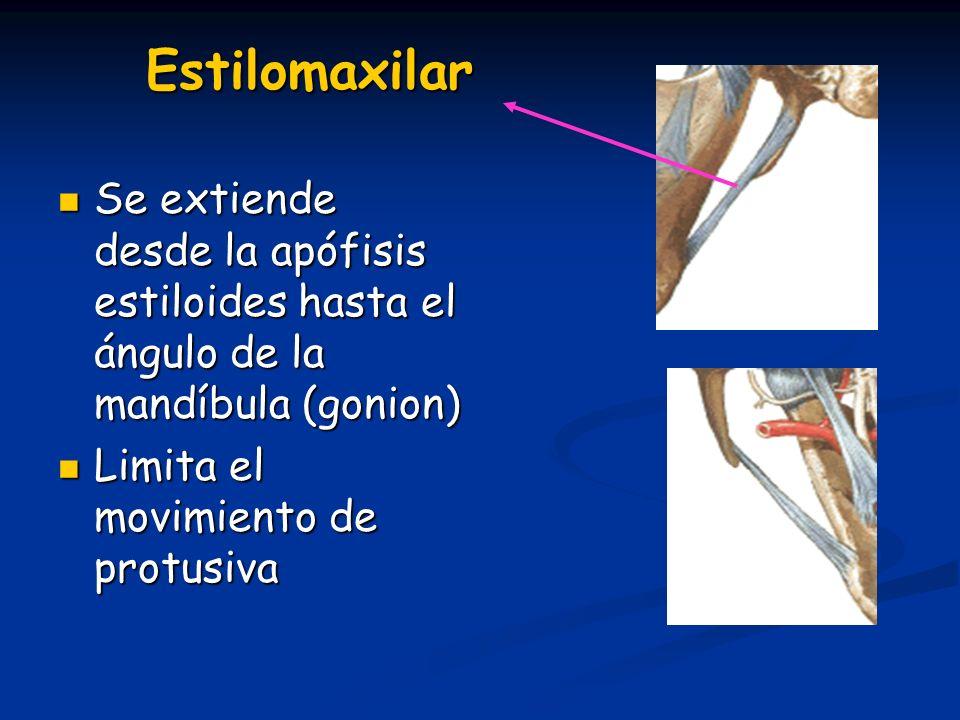 Estilomaxilar Se extiende desde la apófisis estiloides hasta el ángulo de la mandíbula (gonion) Limita el movimiento de protusiva.