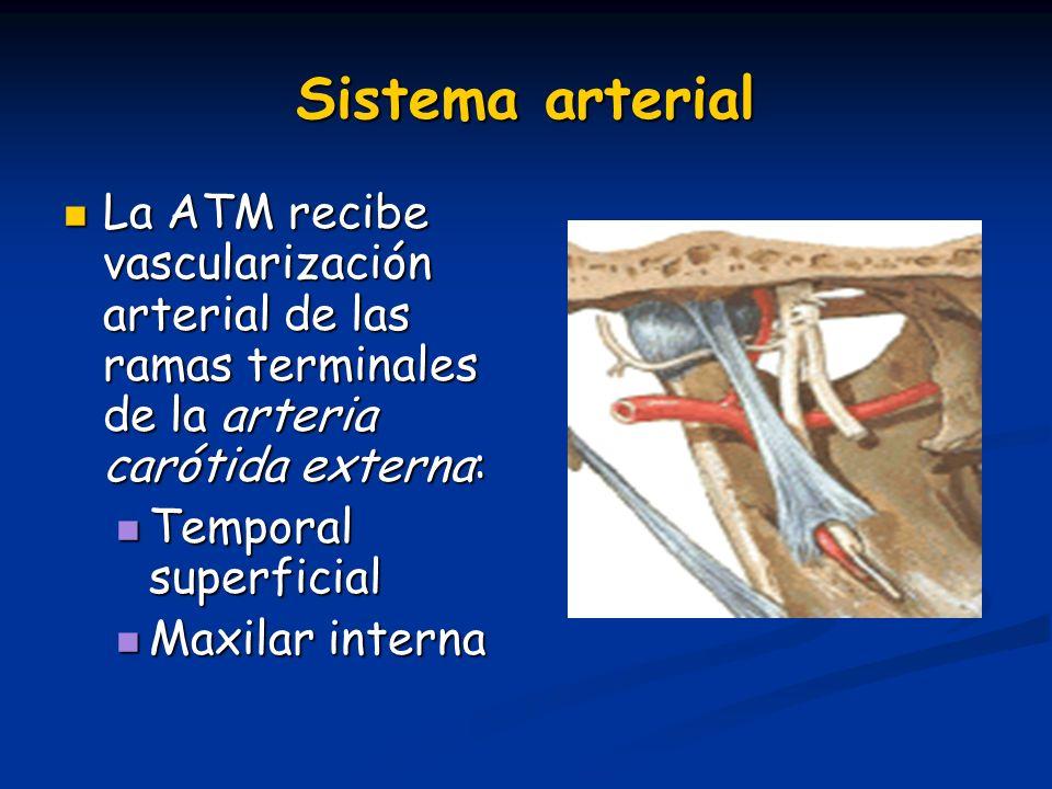 Sistema arterial La ATM recibe vascularización arterial de las ramas terminales de la arteria carótida externa: