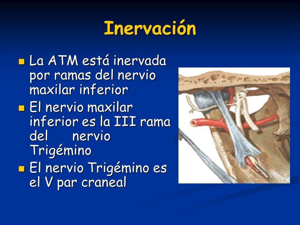Inervación La ATM está inervada por ramas del nervio maxilar inferior