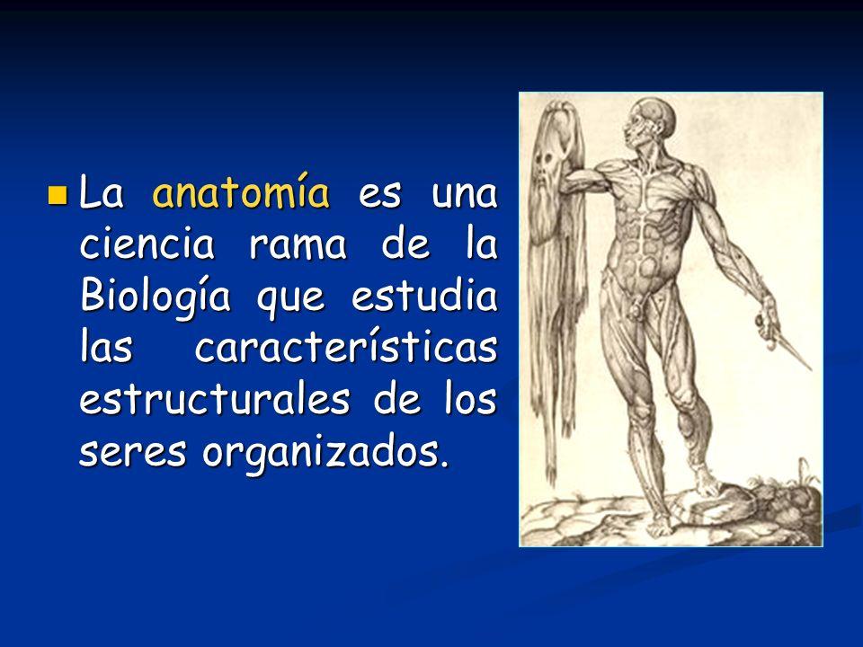 La anatomía es una ciencia rama de la Biología que estudia las características estructurales de los seres organizados.