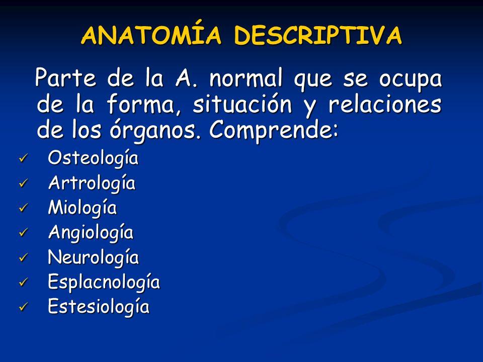 ANATOMÍA DESCRIPTIVA Parte de la A. normal que se ocupa de la forma, situación y relaciones de los órganos. Comprende: