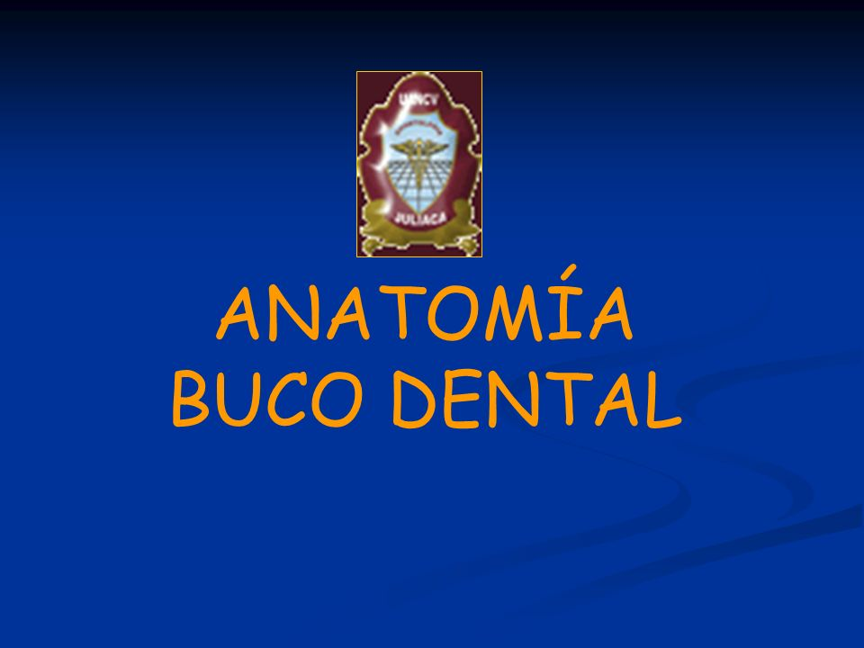 ANATOMÍA BUCO DENTAL