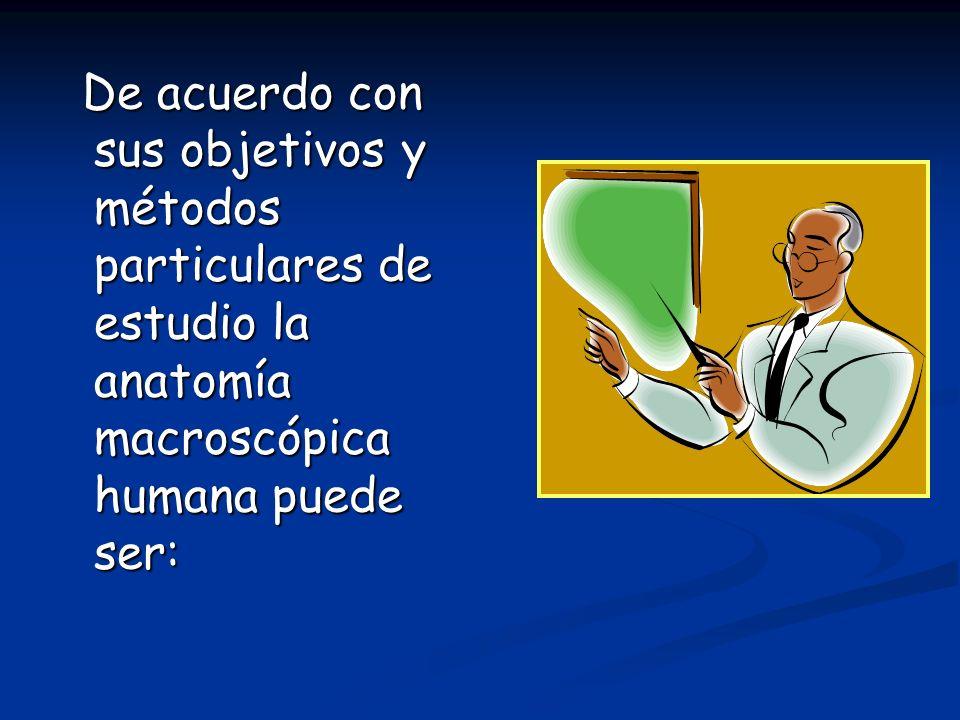 De acuerdo con sus objetivos y métodos particulares de estudio la anatomía macroscópica humana puede ser: