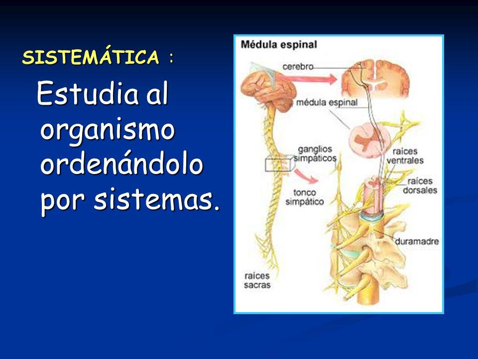 SISTEMÁTICA : Estudia al organismo ordenándolo por sistemas.
