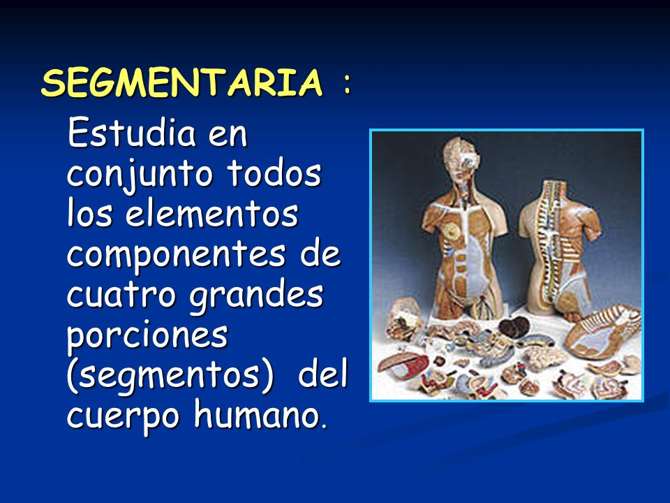 SEGMENTARIA : Estudia en conjunto todos los elementos componentes de cuatro grandes porciones (segmentos) del cuerpo humano.