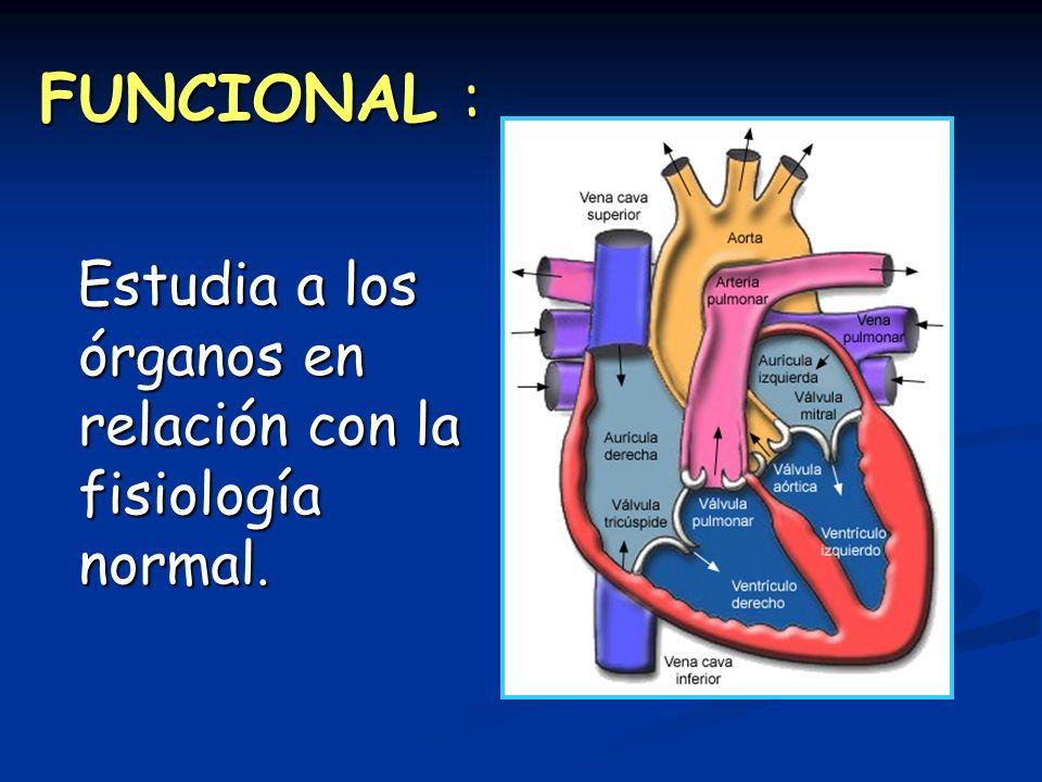 FUNCIONAL : Estudia a los órganos en relación con la fisiología normal.