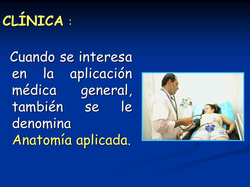 CLÍNICA : Cuando se interesa en la aplicación médica general, también se le denomina Anatomía aplicada.