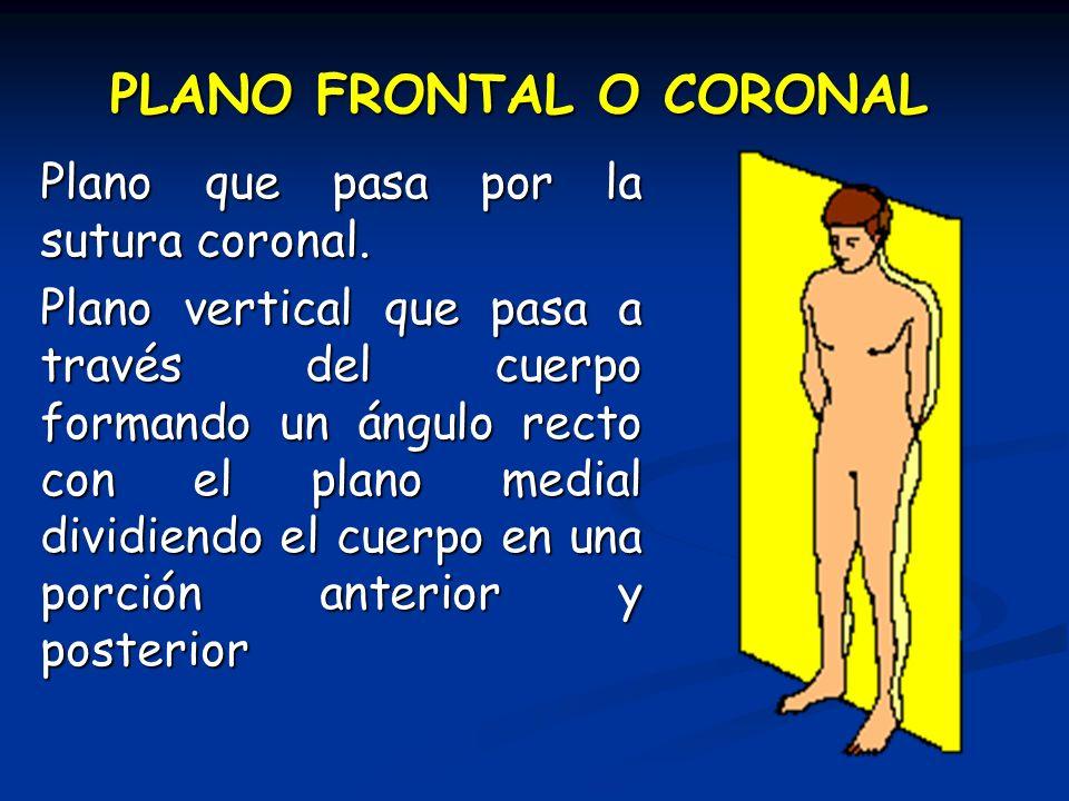 PLANO FRONTAL O CORONAL