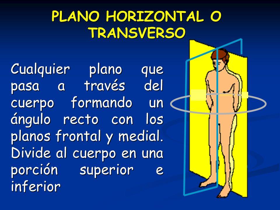 PLANO HORIZONTAL O TRANSVERSO