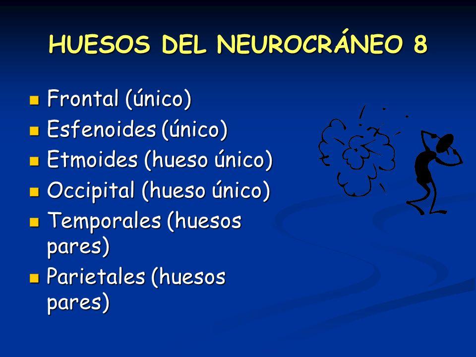 HUESOS DEL NEUROCRÁNEO 8