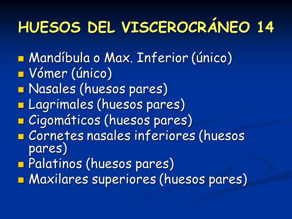HUESOS DEL VISCEROCRÁNEO 14