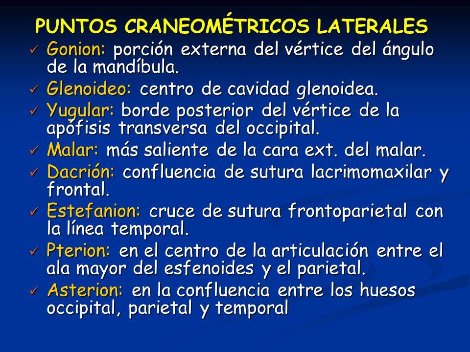 PUNTOS CRANEOMÉTRICOS LATERALES