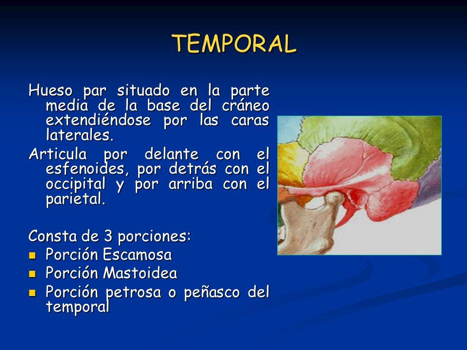 TEMPORAL Hueso par situado en la parte media de la base del cráneo extendiéndose por las caras laterales.