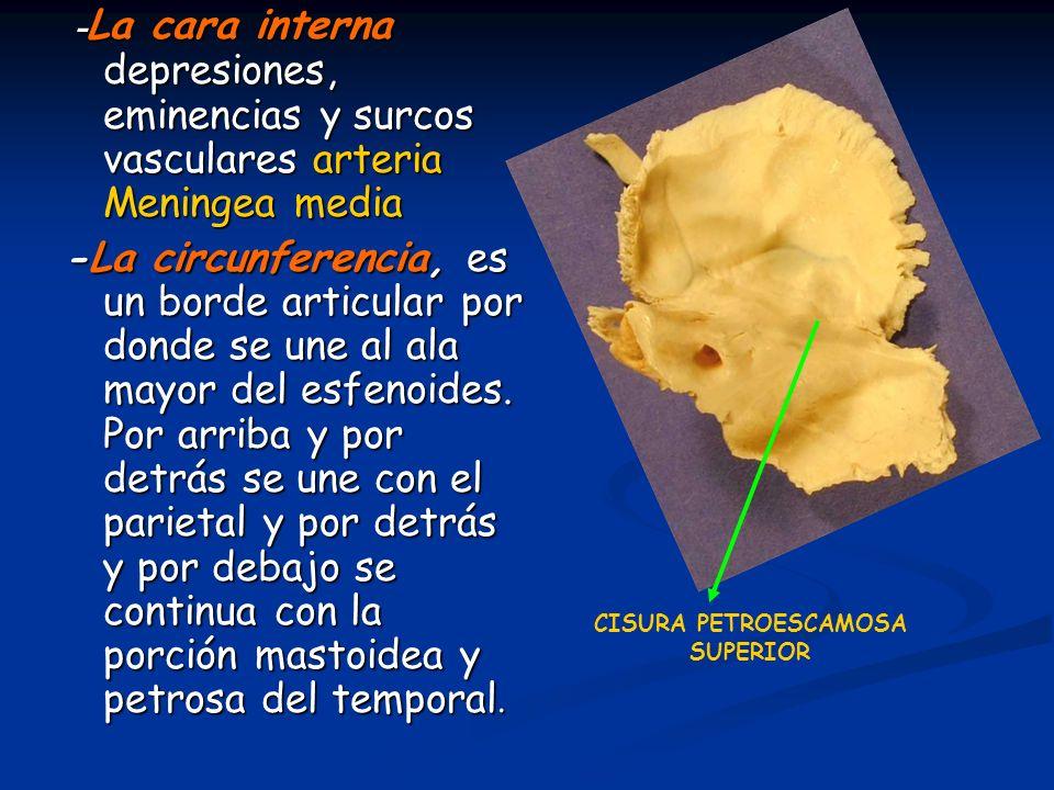 -La cara interna depresiones, eminencias y surcos vasculares arteria Meningea media