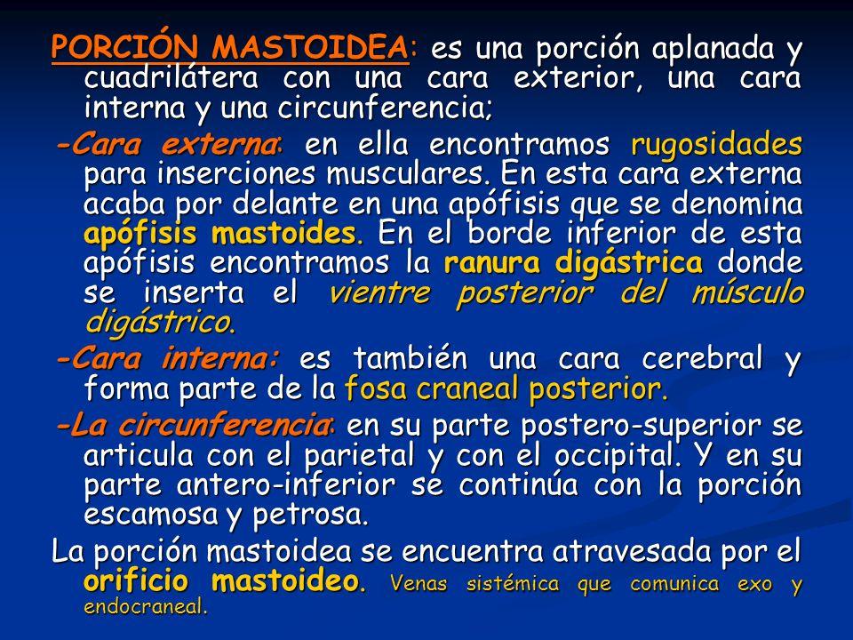 PORCIÓN MASTOIDEA: es una porción aplanada y cuadrilátera con una cara exterior, una cara interna y una circunferencia;