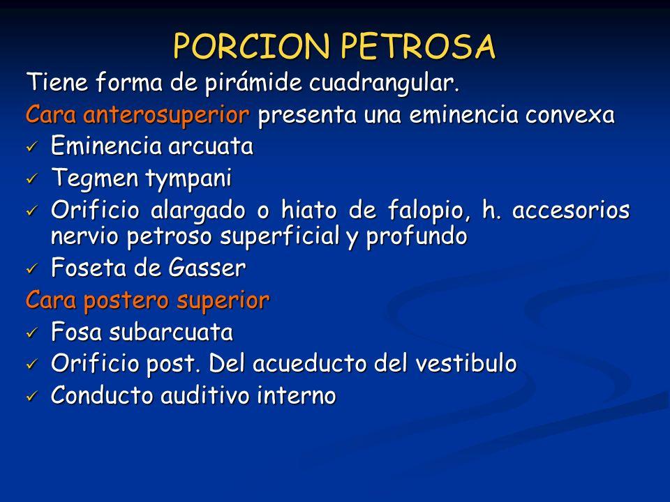 PORCION PETROSA Tiene forma de pirámide cuadrangular.