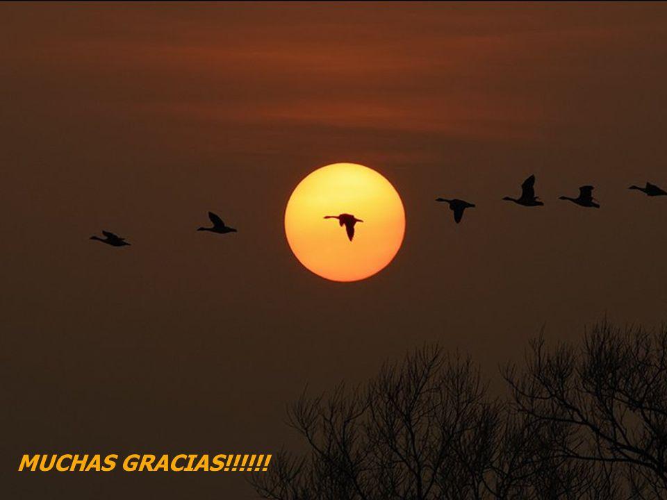 MUCHAS GRACIAS!!!!!! RGK