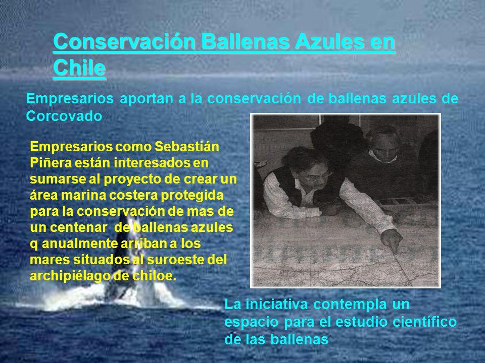 Conservación Ballenas Azules en Chile