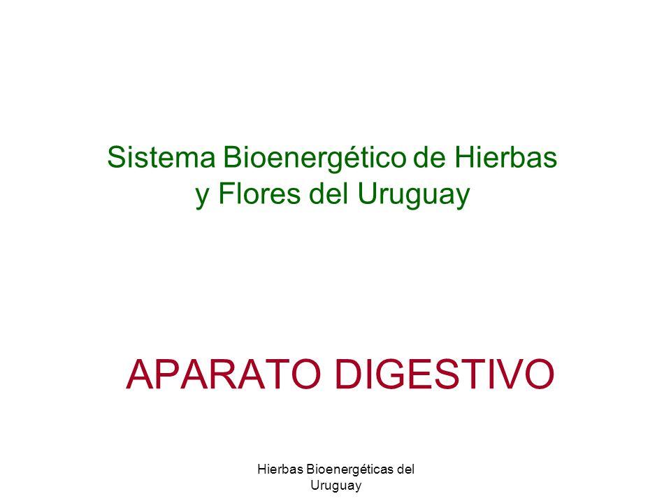 Sistema Bioenergético de Hierbas y Flores del Uruguay
