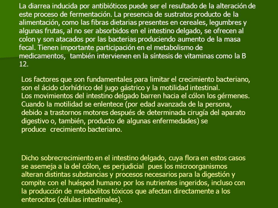 La diarrea inducida por antibióticos puede ser el resultado de la alteración de este proceso de fermentación. La presencia de sustratos producto de la alimentación, como las fibras dietarias presentes en cereales, legumbres y algunas frutas, al no ser absorbidos en el intestino delgado, se ofrecen al colon y son atacados por las bacterias produciendo aumento de la masa fecal. Tienen importante participación en el metabolismo de medicamentos, también intervienen en la síntesis de vitaminas como la B 12.