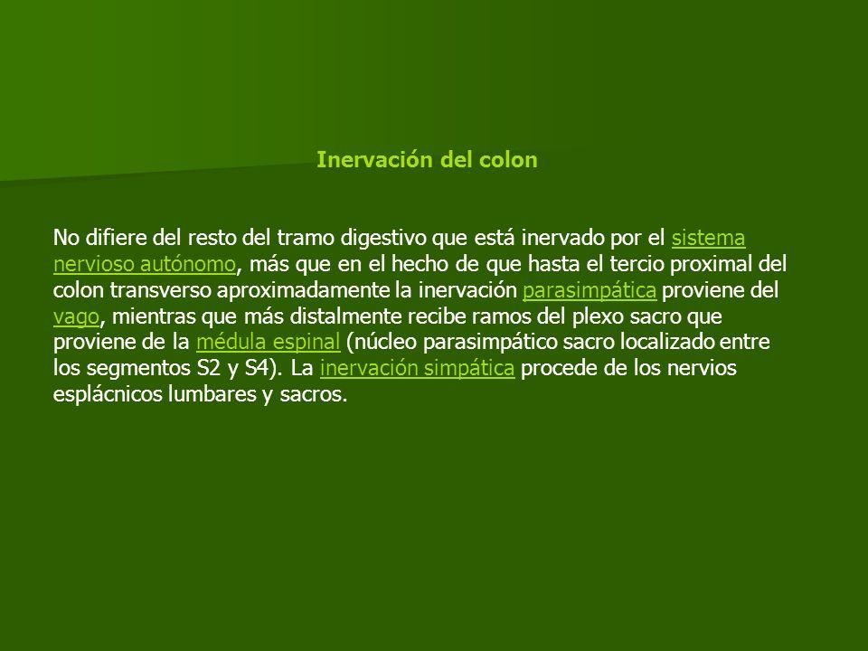 Inervación del colon